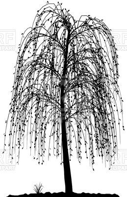 High detailed willow tree silhouette Stock Vector Image.
