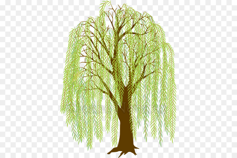 Weeping willow Drawing Clip art Tree Image.