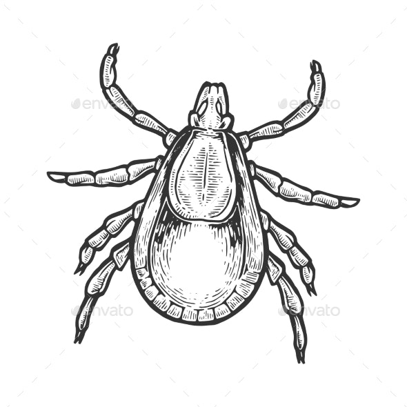 Mite Insect Engraving Vector Illustration.