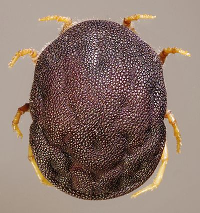 Parasitic Insects, Mites and Ticks: Genera of Medical and.