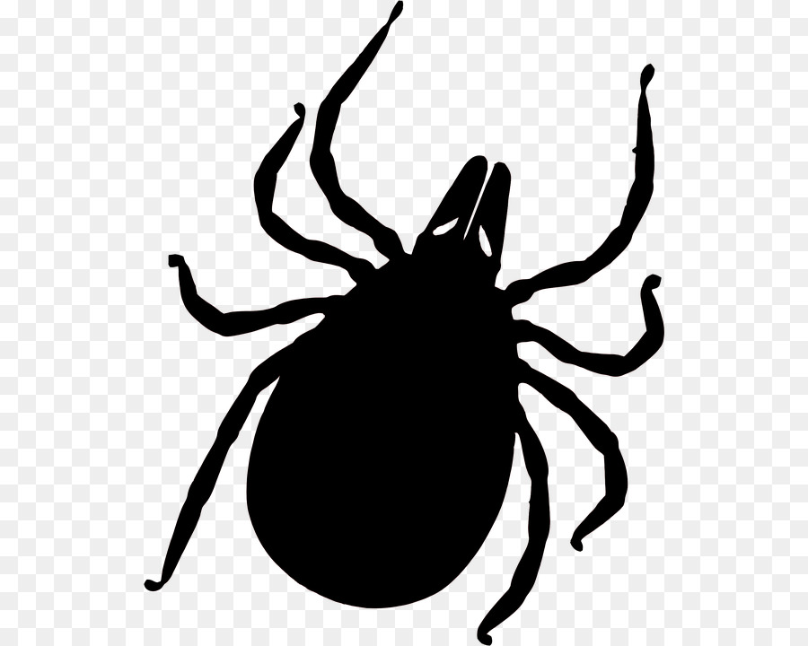 Black Tick.