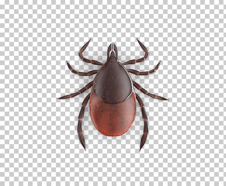 Bed bug bite Tick , BlaCk Tick PNG clipart.