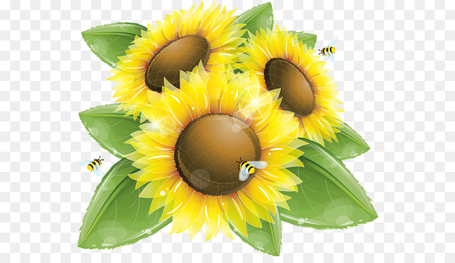 Sunflower Vector Art at GetDrawings.com.