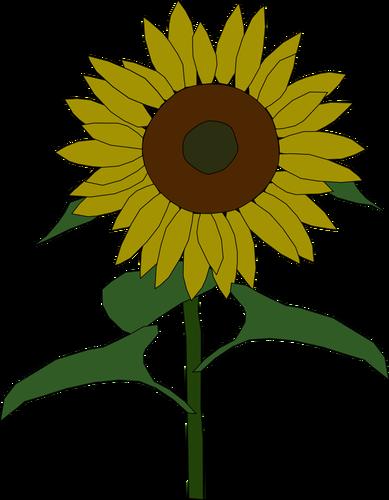 Sunflower vector graphics.