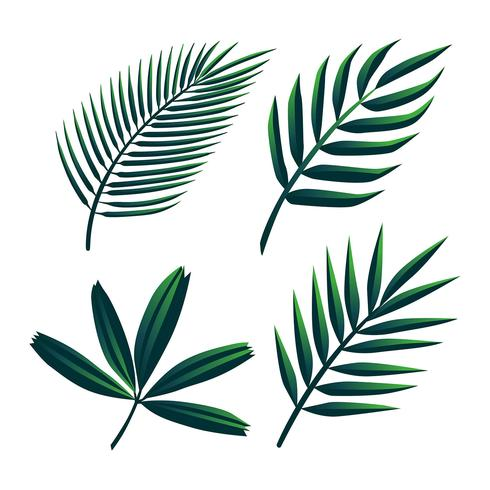 Tropical Palm Green Leaves Clipart Set Vector.