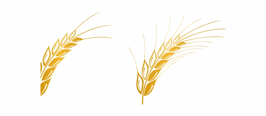 Wheat Vector Transparent Background Wheat Vector Png.