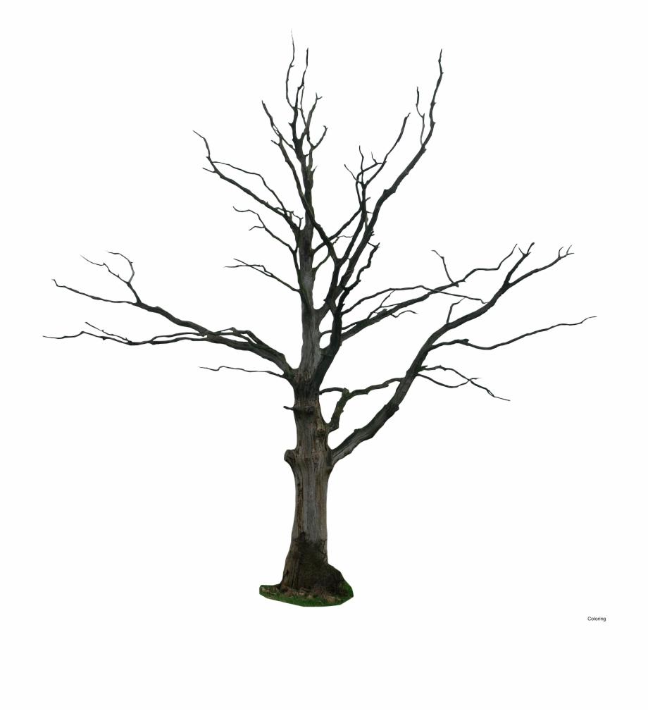 Dead Tree Clipart Vector.