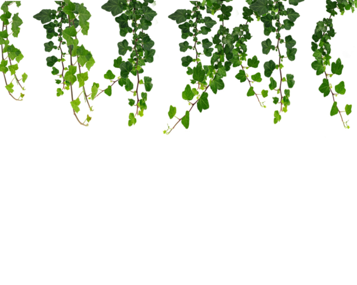 Hanging Vines Png By Moonglowlilly Vines Png Vector, Clipart.