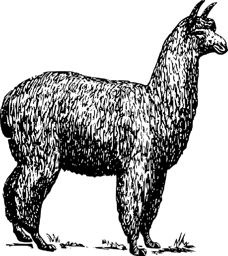 Alpaca Llama Vector graphics Clip art Drawing.