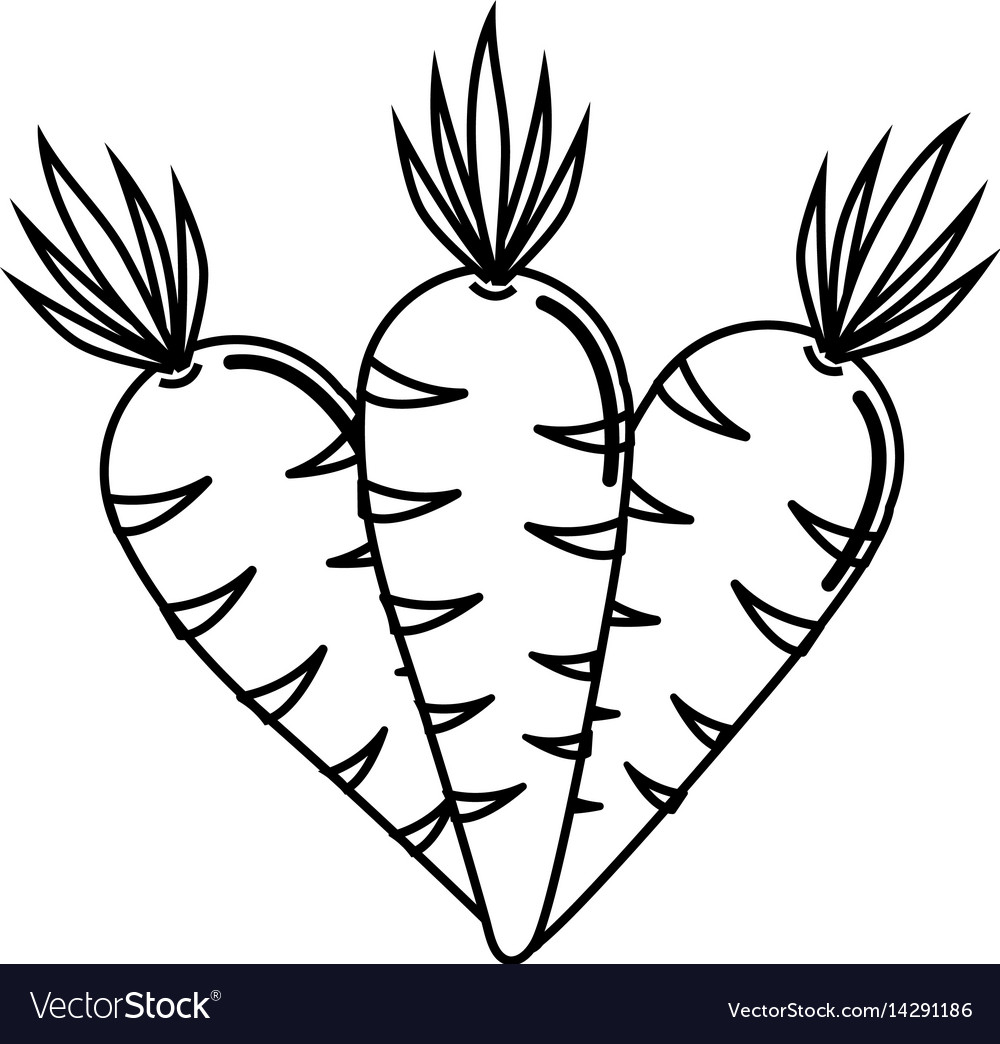 Silhouette carrots vegetable icon image.
