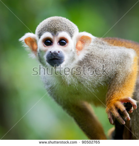Amazon Rainforest Stock Images, Royalty.