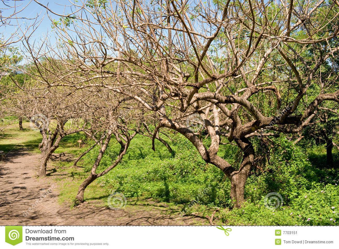 Vegetation In Nicaragua Stock Image.