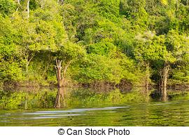 Pictures of Amazon Rainforest Swamp.