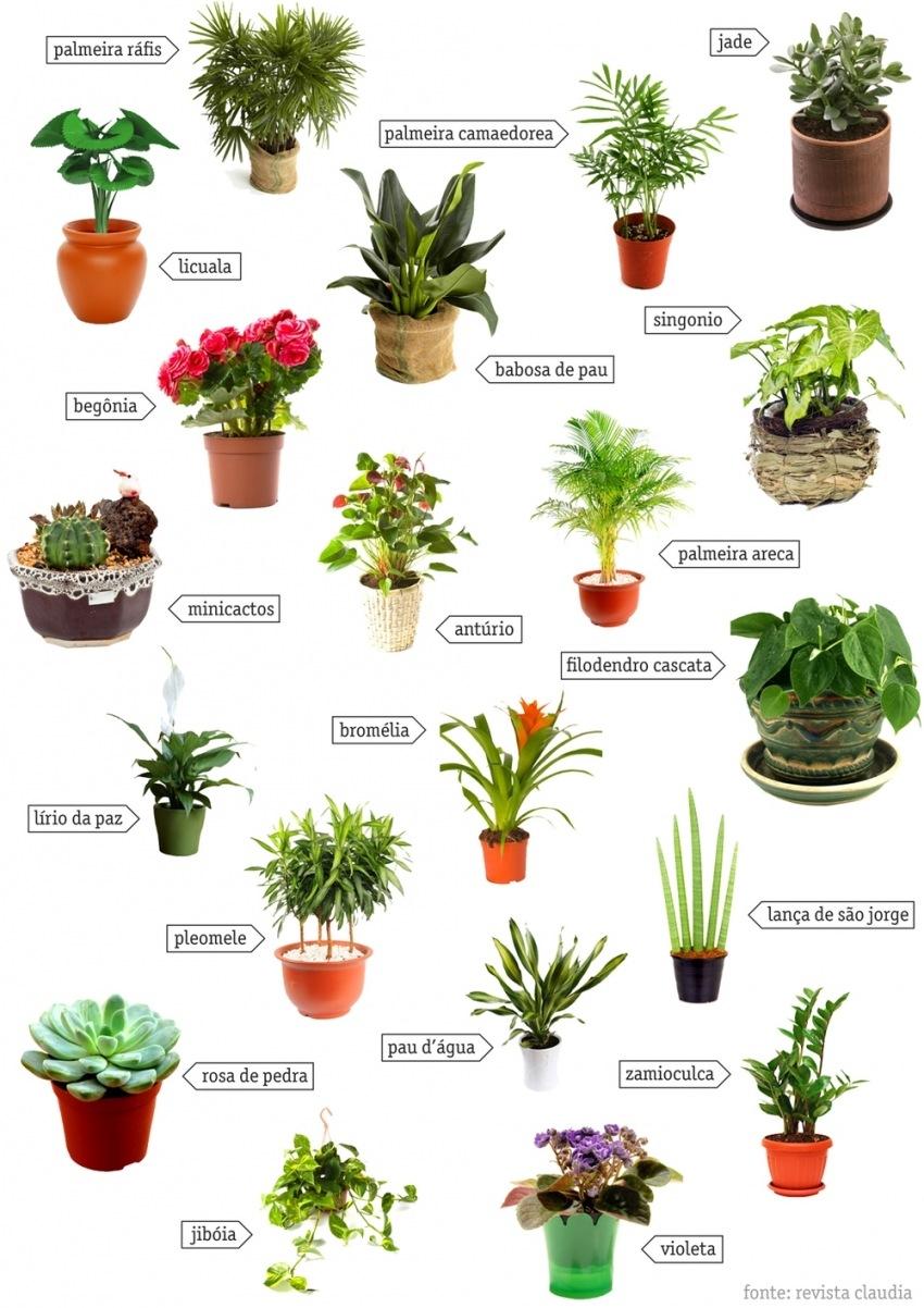 Vegetação para ambientes internos — DOBRA.