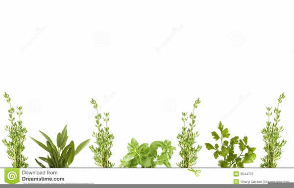 Free Vegetable Clipart Borders.