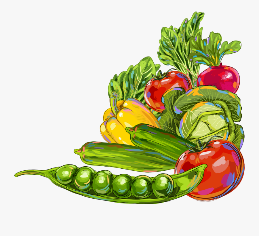 Vegetable Okra Fruit Illustration.
