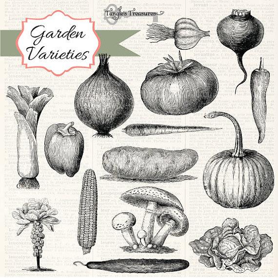 Garden Variety Vintage Vegetable clipart by TanglesTreasures.