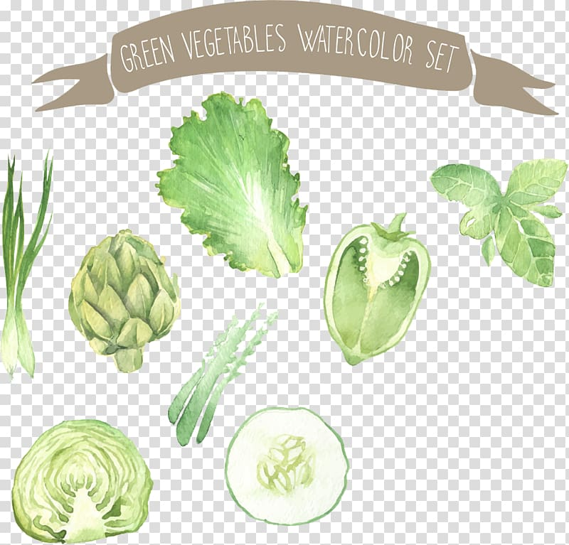 Green veggies , Watercolor painting Vegetable Drawing.
