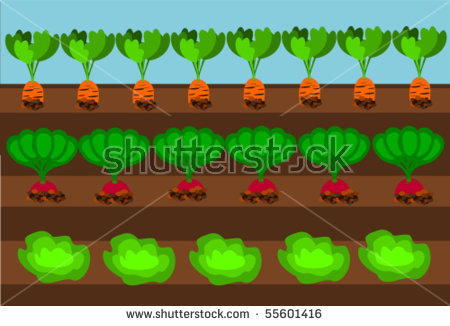 vegetable field clipart clipground