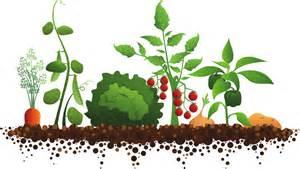 Vegetable garden clipart familyhouse co Clipartix, Garden and.