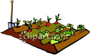 Vegetable Garden Rows Clipart.