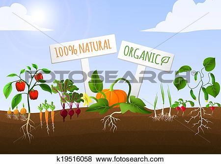 Vegetable garden Clip Art Illustrations. 13,555 vegetable garden.