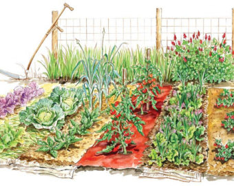 814 Vegetable Garden free clipart.