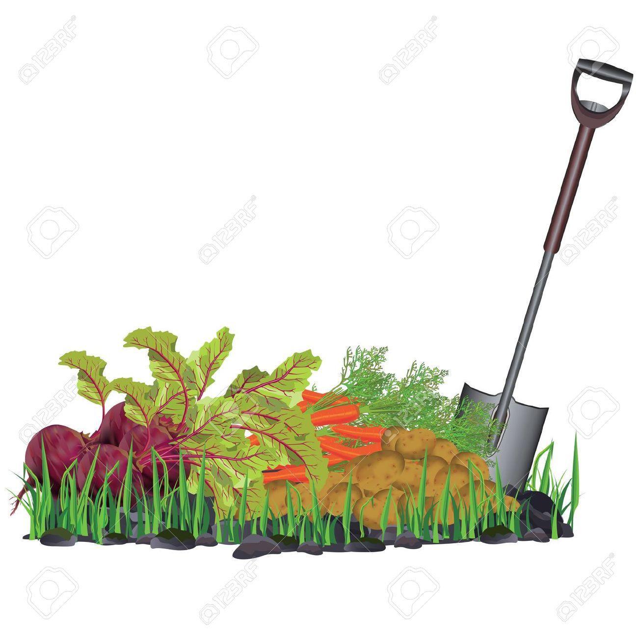 Vegetable gardening clipart.