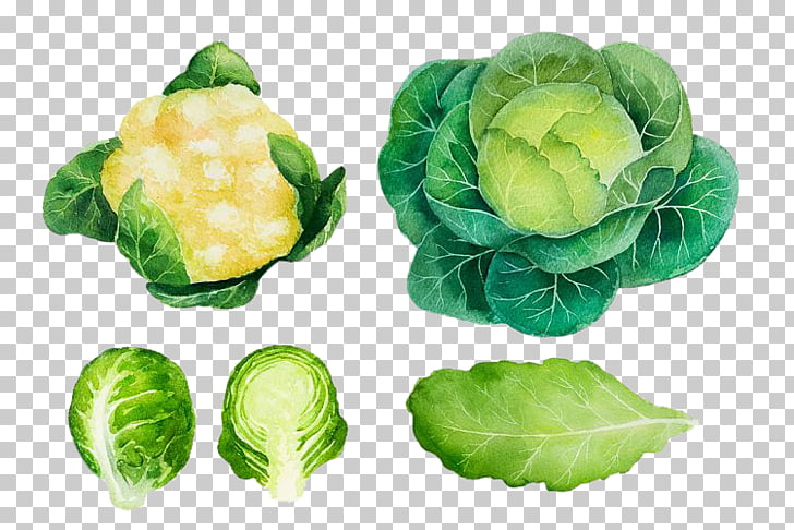 Brussels sprout Cabbage Vegetable Watercolor painting Logo.