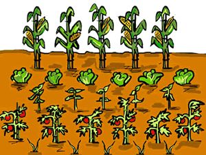 Clip Art Vegetable Garden.