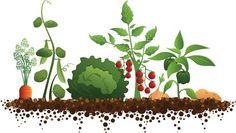 School vegetable garden clipart.