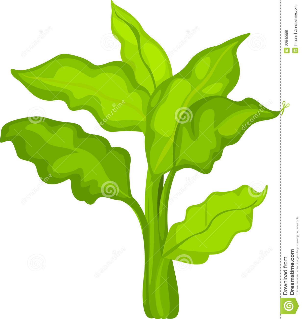 Illustration Plants And Vegetable Royalty Free Stock Photo.