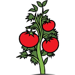 tomato plant clipart, cliparts of tomato plant free download (wmf.