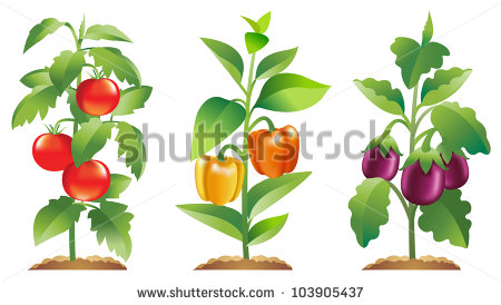 Vegetable Plants Stock Photos, Royalty.