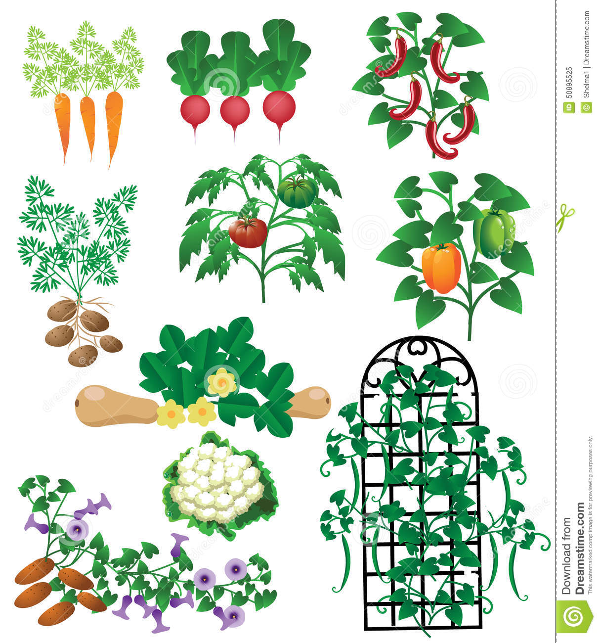 Vegetable Plants Isolated Stock Vector.