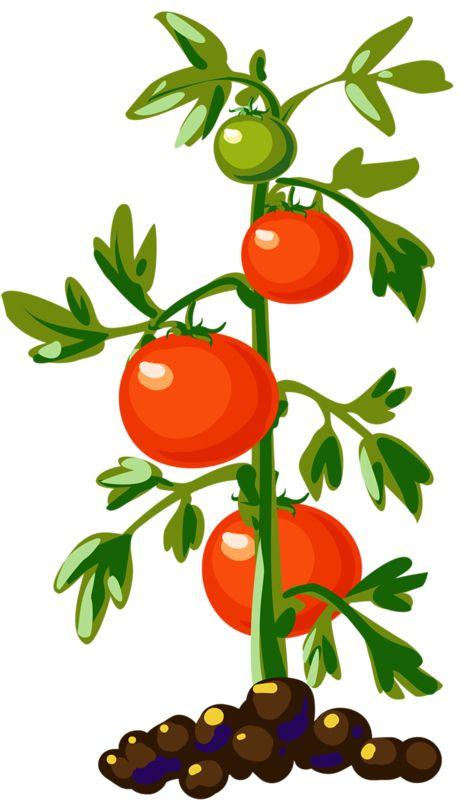 Vegetable Plants Clipart.
