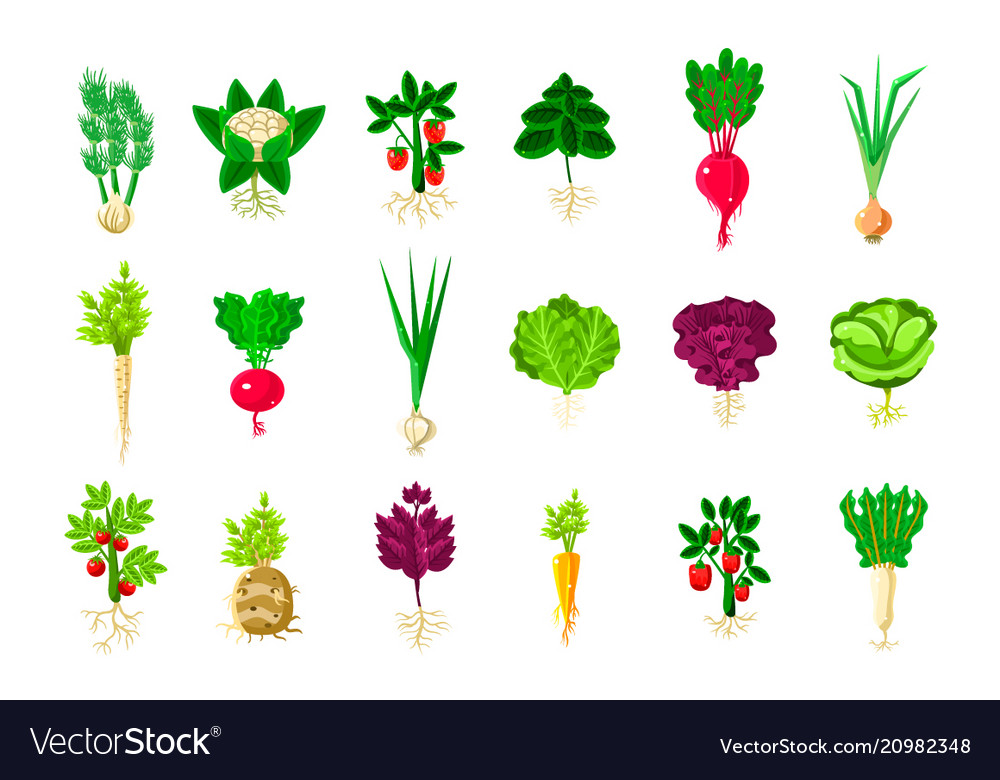 Fresh vegetable plants with roots set.