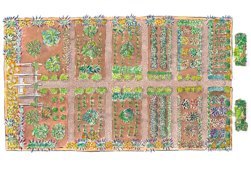 Vegetable plots clipart 20 free Cliparts | Download images ...