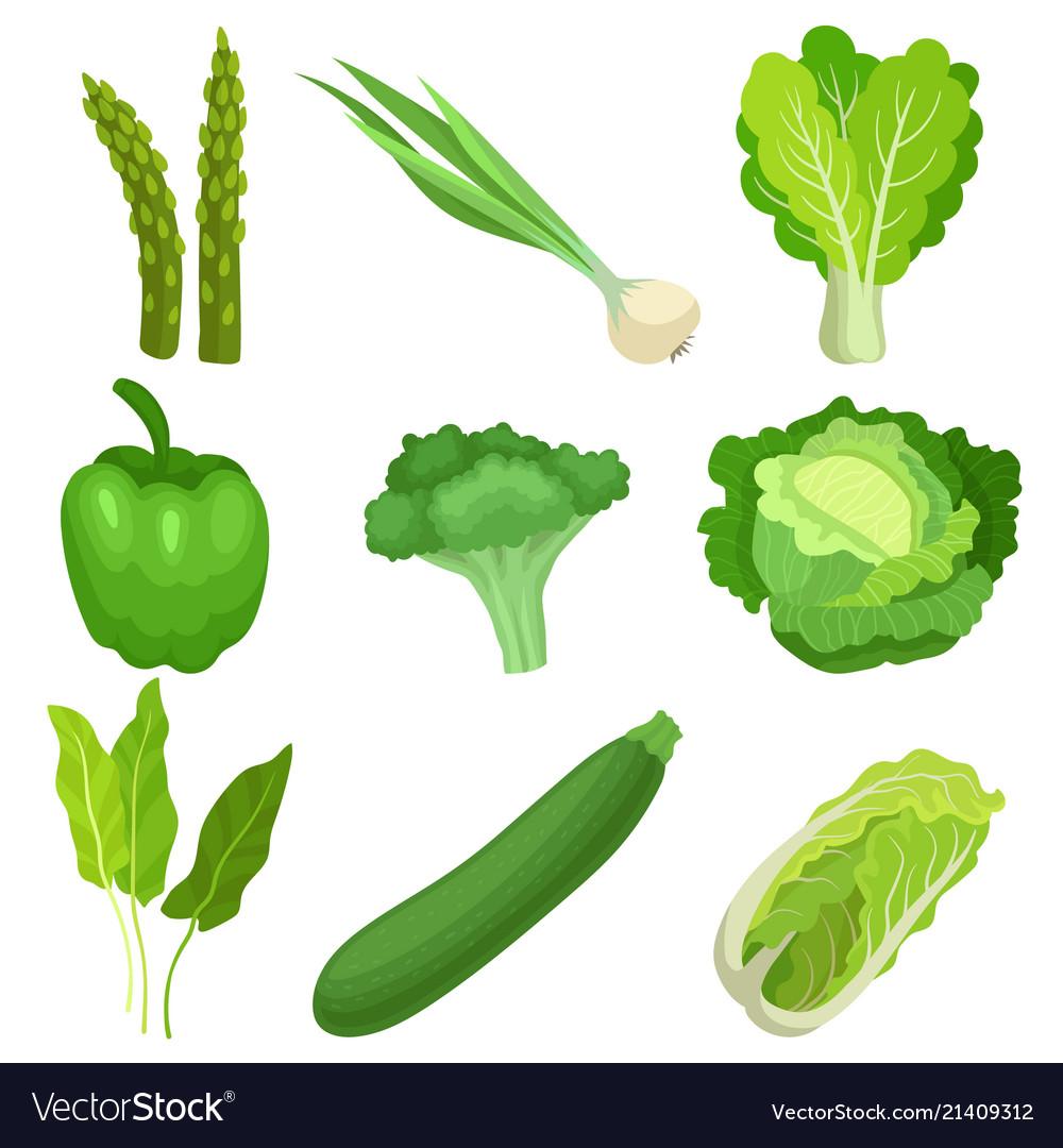 Flat set of fresh green garden vegetables.