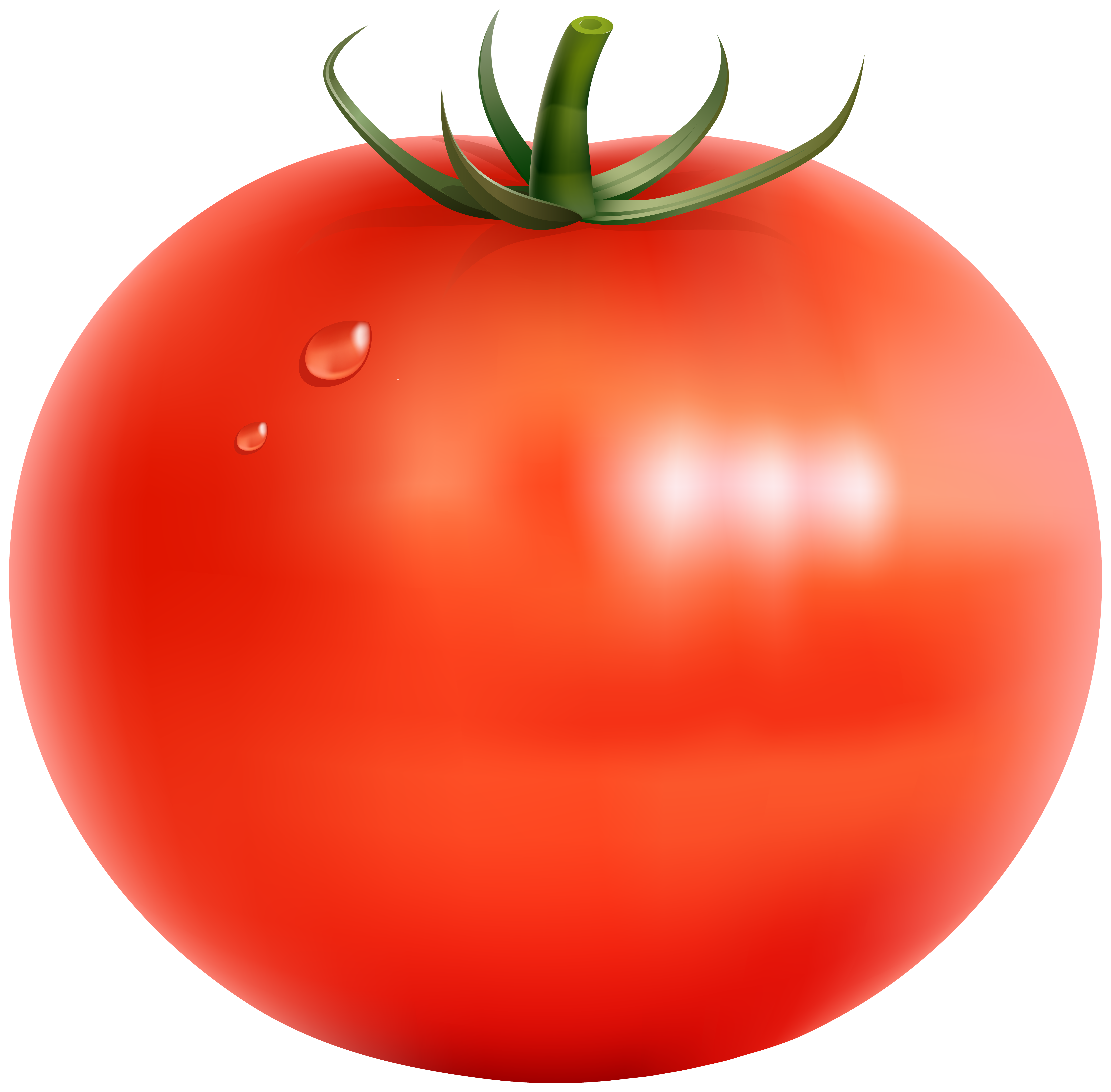 vegetables clipart transparent - Clipground Vector Tomato Png