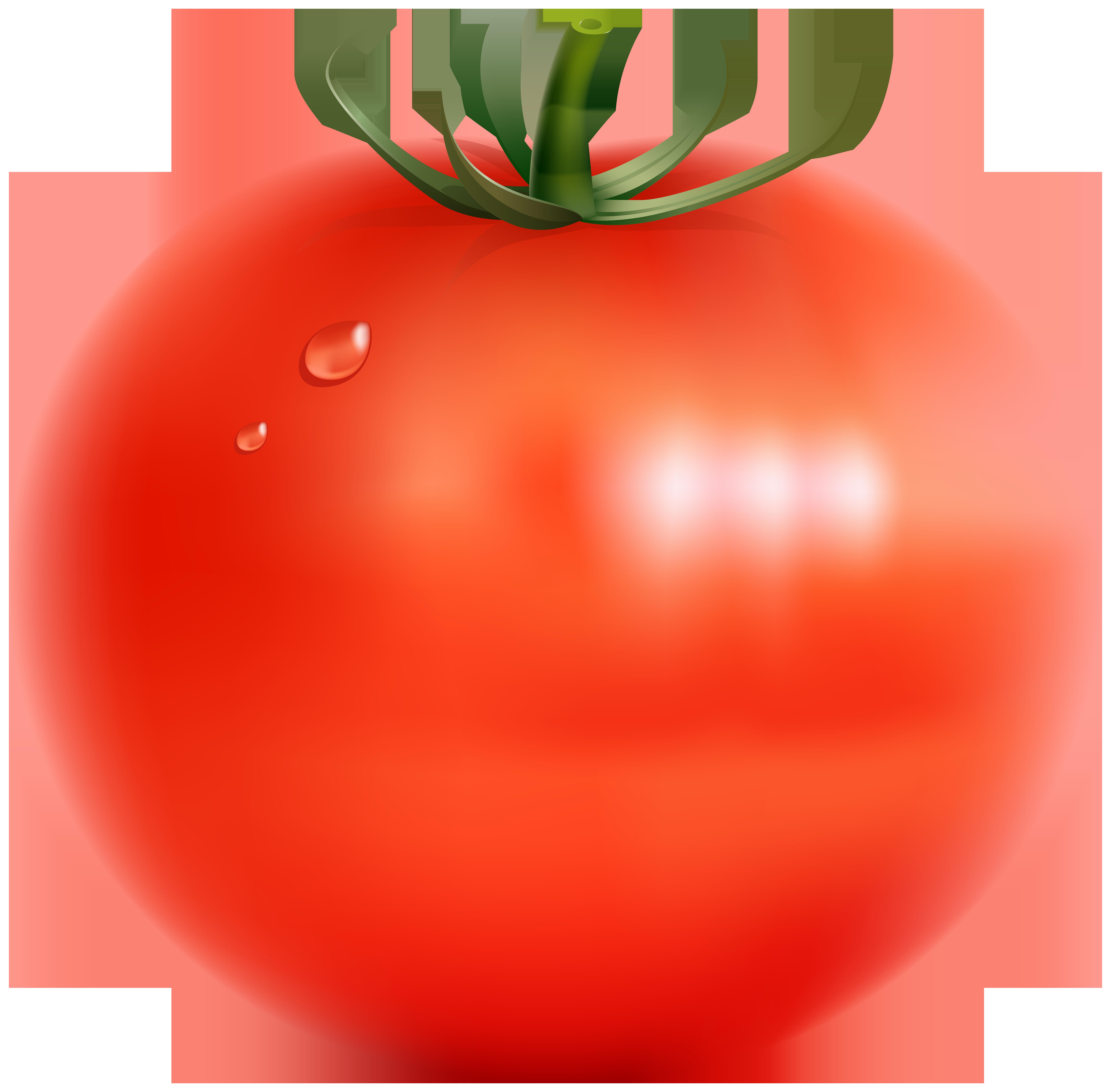 Tomato Transparent PNG Clip Art Image.