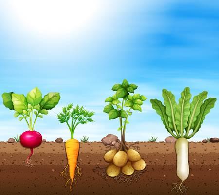 Underground Vegetables Clipart.