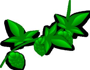 Hops Plant Clip Art at Clker.com.