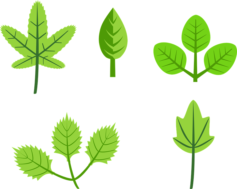 Free vector graphic: Leaf, Tree, Green, Plants, Branch.