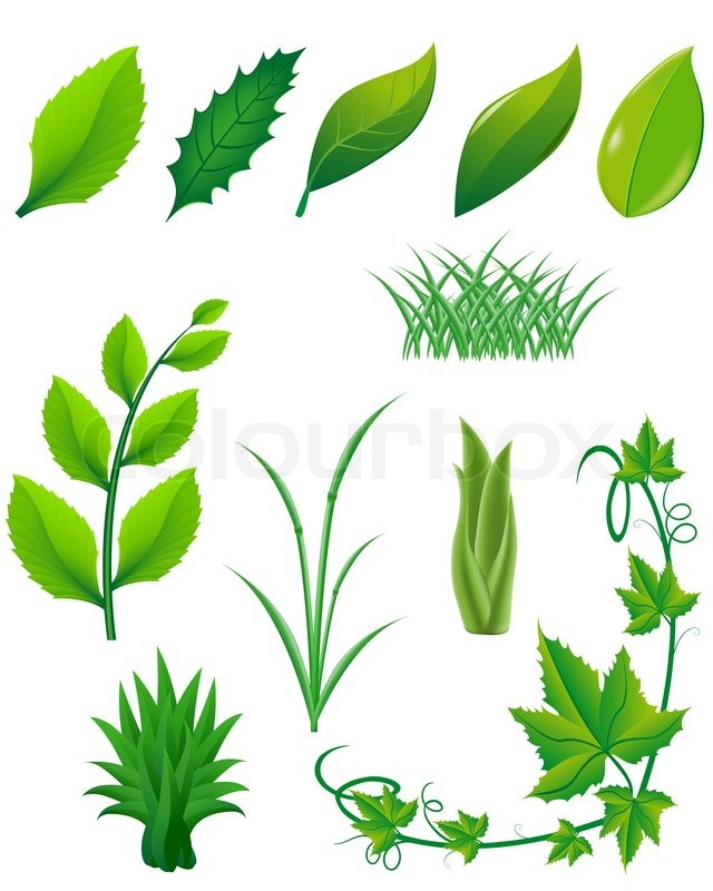Icon set of green leaves and plants for design.