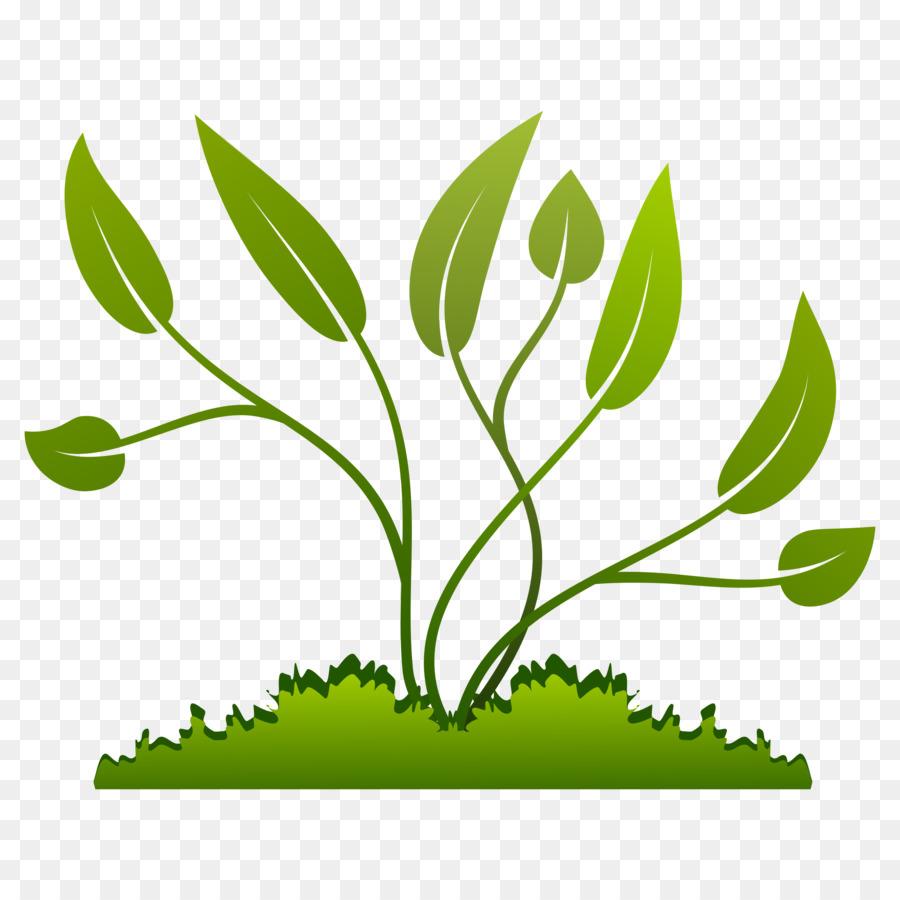 Seedling clipart vegetation, Seedling vegetation Transparent.