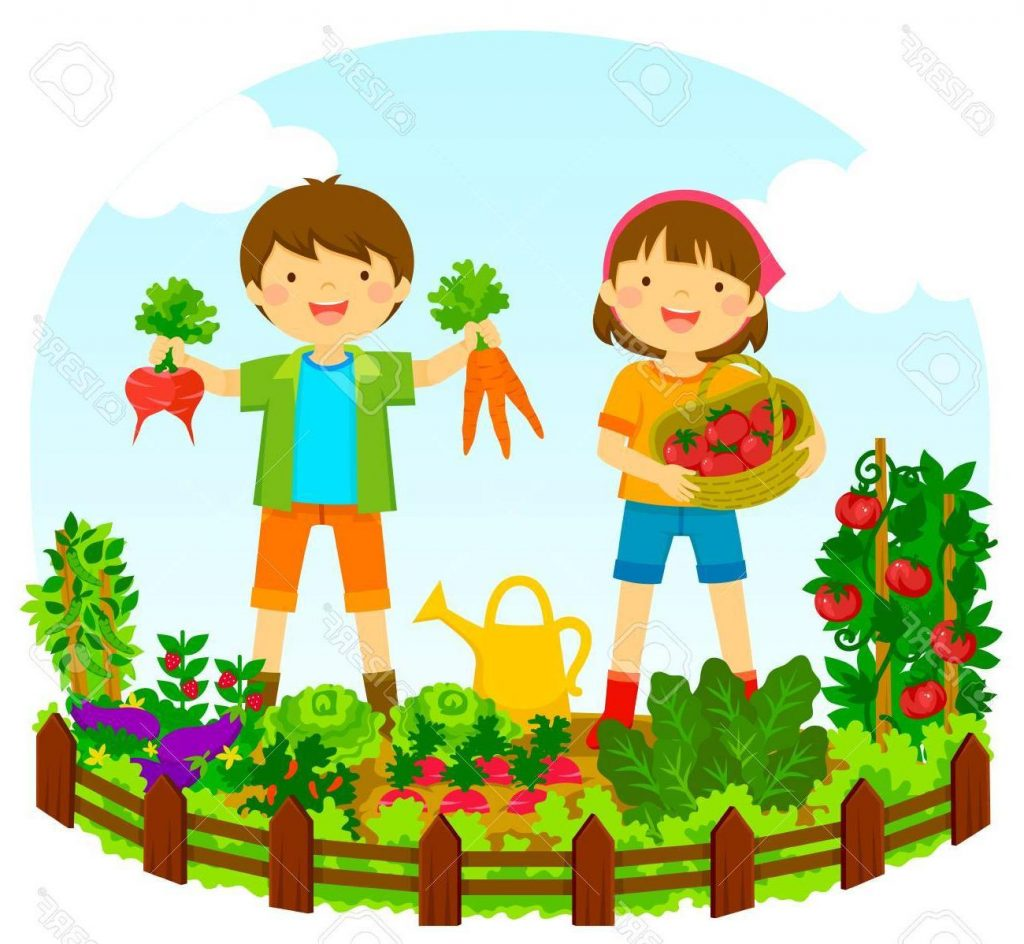 814 Vegetable Garden free clipart.