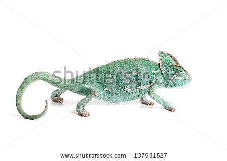 Green Lizard Stock Photos, Royalty.