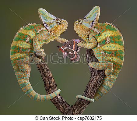 Stock Images of Selfish Chameleons.