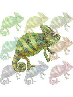 Veiled Chameleon clipart graphics (Free clip art.